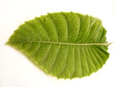 Free Green Leaf Royalty Free Stock Image - 2234146