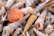 Free Shell And Snail On The Beach Royalty Free Stock Photos - 2234958