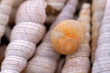 Free Shell And Snail On The Beach Royalty Free Stock Photo - 2234965