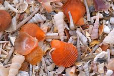 Free Shell And Snail On The Beach Stock Photos - 2234983
