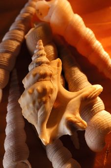 Shell And Snail On The Beach Stock Photo