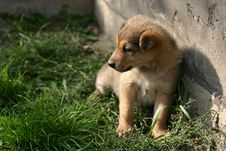 Free Watching Puppy Royalty Free Stock Photos - 2235658