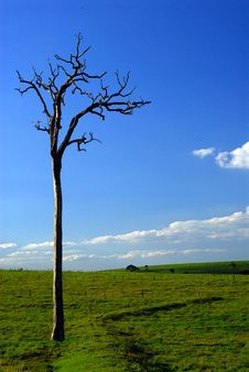 Free Old Tree Stock Photography - 2235702