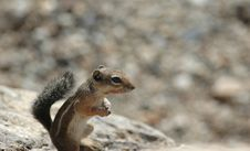Free Rock Squirrel Royalty Free Stock Images - 2235759