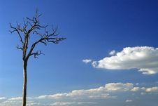Free Old Tree Stock Photos - 2235873