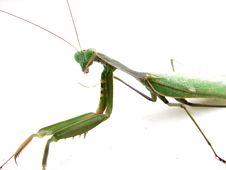 Free Grasshopper Royalty Free Stock Photos - 2235898