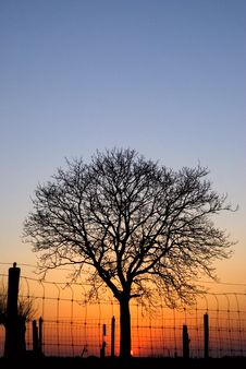Free Sunset With Tree Royalty Free Stock Image - 2236366