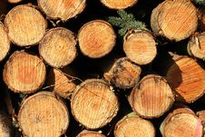 Free Stack Of Logs Stock Image - 2236751