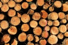 Free Stack Of Logs Stock Photo - 2236760