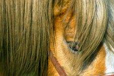 Free Close-up Of A Horse Stock Photography - 2238412