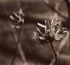 Free Dried Flowers Stock Photos - 2238863