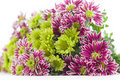 Free Bouquet Of Chrysanthemums Blur Royalty Free Stock Photos - 22302678