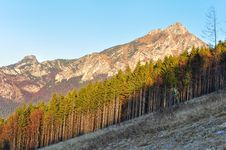 Free Autumn Tree Line With Rocky Mountain Royalty Free Stock Photography - 22302367