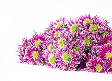 Free Bouquet Of Pink Chrysanthemums Stock Photo - 22302590