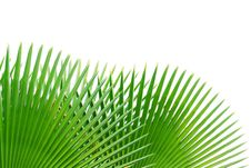 Free Palm Leaf Isolated On White Background Stock Image - 22308281