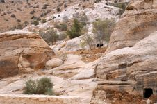 Sparse Vegetation In The Mountains Of Petra Stock Images