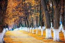 Free Autumn Park Stock Photo - 22317590