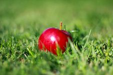 Free Apple Stock Images - 22331004
