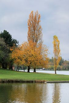 Autumn Trees Near The Lake Stock Images