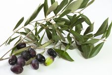 Free Olive Branches Stock Photography - 22339312
