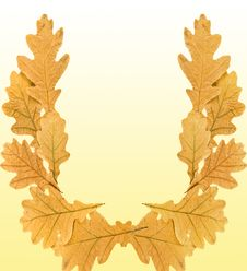 Free Dry Leaves Of Oak On A Yellow Background. Royalty Free Stock Photos - 22343978