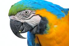 Free Parrot Macaw Head Close Up Royalty Free Stock Photos - 22344728
