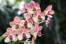Free Orchid Royalty Free Stock Photos - 22346188