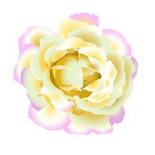 Free Gentle  Rose Royalty Free Stock Image - 22349586