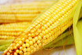 Free Corn Stock Photo - 22367020
