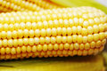 Free Corn Stock Photography - 22367042