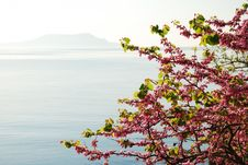 Free Blossoming Cherry Tree Against The Sea. Stock Image - 22364491