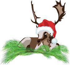 Free Deer Wearing A Santa Claus Hat Royalty Free Stock Photography - 22364557