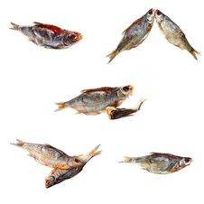 Collection Dried Fishes Royalty Free Stock Photography