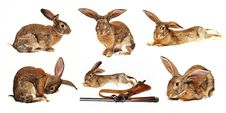 Free Six Rabbits On A White Background In The Foregroun Royalty Free Stock Photo - 22366825