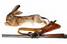 Free Rabbit And The Disassembled Gun Royalty Free Stock Photography - 22367417