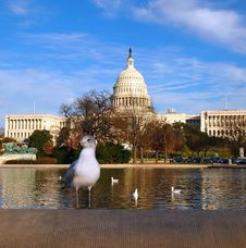 Free Capitol Building With Seagull Royalty Free Stock Photo - 22369065