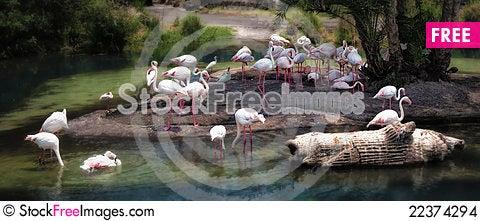 Free Flamingos Stock Images - 22374294
