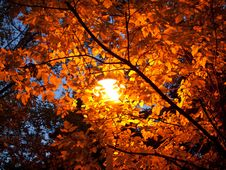 Free Lamp In Autumn Royalty Free Stock Photography - 22383157