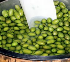 Free Green Olive Stock Photography - 22384532