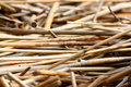 Free Broken Rush Texture Stock Images - 22398334