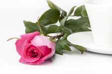 Free Pink Roses In A Cup Stock Photos - 22391453