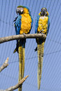 Free Blue And Yellow Macaw Royalty Free Stock Photography - 2242917