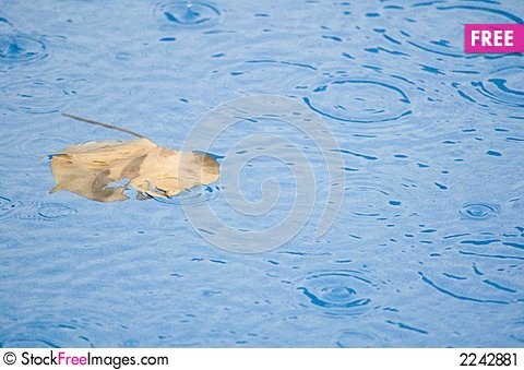 Free Leaf In Pool Stock Image - 2242881