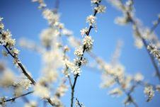 Free Bloom Stock Image - 2240091