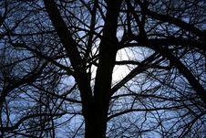 Free Tree Silhouette Royalty Free Stock Photos - 2241418