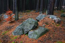 Stones In Forest Stock Images