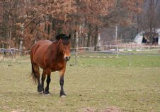 Free Gentlemanlike Horse Royalty Free Stock Image - 2243256