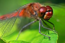 Free Dragonfly Royalty Free Stock Image - 2244416