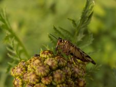 Free Scorpion Fly Stock Photography - 2245412