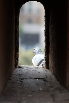 Free Pigeon In The Tower Window Royalty Free Stock Photos - 2246018
